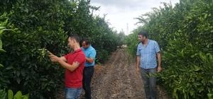 Akdeniz Meyve Sineği ile Mücadele Timi görevde