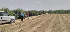 Mersin'in çilek üretiminde sloganı 'Temiz fide, temiz toprak'