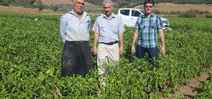 Sebze Üretimini Geliştirme Projesi'nde 24 çiftçiye destek verildi