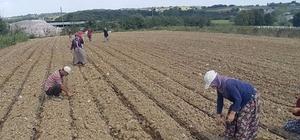 Pancar Kooperatifinden lahana üreticilerine sulama desteği