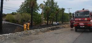 Elektrik tellerine değen palmiye ağaçları yangın çıkardı