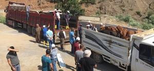Beytüşşebap'ta 25 genç çiftçinin projesi kabul edildi