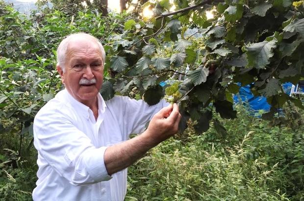 CHP Giresun Milletvekili Bülent Bektaşoğlu;