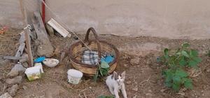 Milas'ta kedi yavrusunu iple bağladılar