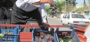 80 Yaşındaki Osman dede'nin yetiştirdiği organik üzümlere yoğun ilgi