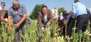 Başkan Soylu, vatandaşlarla buluşup tütün kırdı
