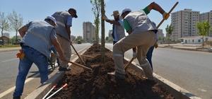 Diyarbakır'da kaldırım ve refüjler ağaçlandırılıyor