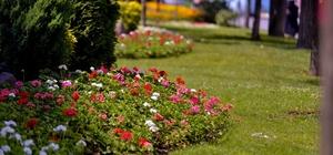Maltepe'yi çiçeklerle bezediler