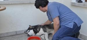 Tepebaşı Belediyesi sokak hayvanlarını unutmuyor