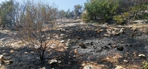 Besni'de 3 dönüm orman alanı yandı