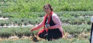 Ceritoğlu, aromatik tıbbi bitkiler için Fransa'ya gitti