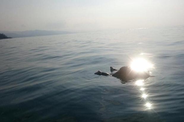 Giresun'da balık tutarken denize düşerek kaybolan kişinin cesedine ulaşıldı.