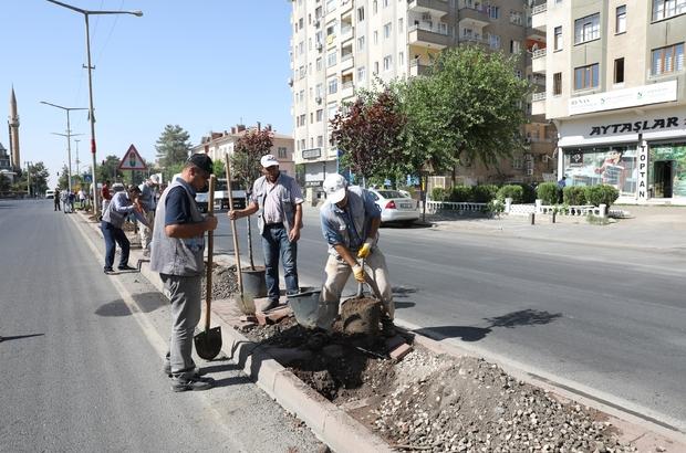 Büyükşehir Belediyesi yeşil bir kent için çalışıyor