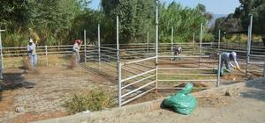 Kurban Bayramı Öncesi Söke'de Hayvan Pazarı Temizlendi
