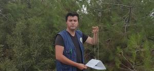Manisa ormanlarında biyolojik mücadele