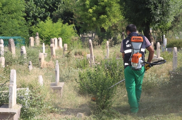Mezarlıklarda yabani otlar toplandı
