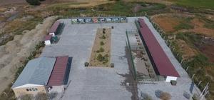 Suluova'da sokak hayvanları için 5 bin metrekarelik merkez