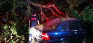 Ödemiş'te rüzgar ağacı otomobilin üzerine devirdi