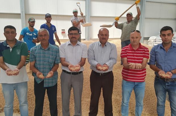 Kayseri Pancar Kooperatifinin Sözleşmeli Tarımı Nohut ve Yeşil Mercimek Ekimine Rağbeti Artırdı