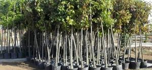 Sungurlu'da 7 bin 500 fidan toprakla buluştu