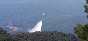 Muğla ve Aydın'da orman yangını