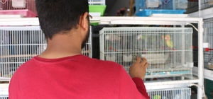 Petshopcular arasındaki kopukluk, sektörü olumsuz etkiliyor