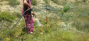 Bolu'da 61 bin fidana can suyu