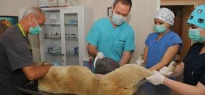 Yüzlerce hayvan Osmangazi'de sağlığına kavuşuyor