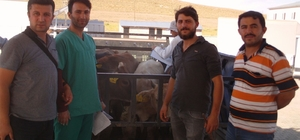Özalplı genç çiftçilere havyan dağıtımı