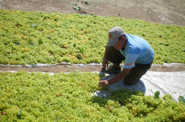 Türkiye 257 bin ton çekirdeksiz kuru üzüm ihraç etti