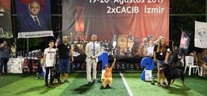 Bayraklı'da köpek ırkları yarıştı