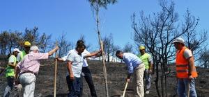 Yangında kararan orman yeniden yeşertiliyor