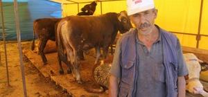 Yemde uygulanan vergi indirimi hayvan fiyatlarını yükseltti