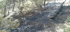 Kars'taki orman yangını söndürüldü