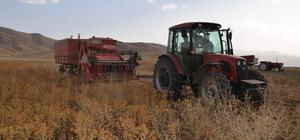 Yüksekova'da aspir hasadı başladı