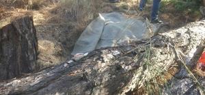 Kestiği ağaç üzerine devrilen kişi hayatını kaybetti