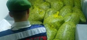 Bursa'da 1,2 ton kaçak midye ele geçirildi