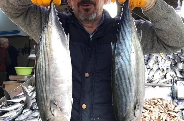 Balıkçılarda torik mutluluğu