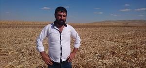 Tarladaki mısırların başkası tarafından hasat edildiği iddiası
