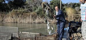Adana'da yumurtalı kefaller denize bırakıldı