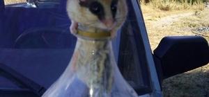 Pet şişeye sıkışan fareyi kurtarıp doğaya bıraktı
