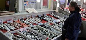 Balıkçıların umudu çinekop