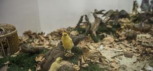 Gaziantep Zooloji ve Doğa Müzesine ilgi