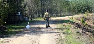 Yaralı bulduğu kuğu 33 yıldır can yoldaşı oldu