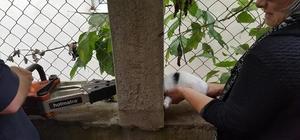 Düzce'de tellere sıkışan yavru kediyi itfaiye ekipleri kurtardı