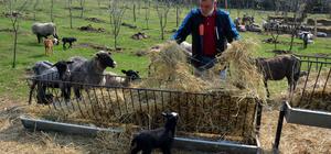 Kentin gürültüsünden uzaklaşıp koyun yetiştiricisi oldu
