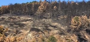 Sakarya'daki orman yangınları