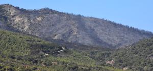 GÜNCELLEME - Muğla'daki orman yangını
