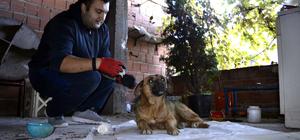 Sokak köpeklerini hayata döndürüyor