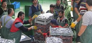 Bir gecede bin 500 ton hamsi avlandı